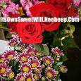 IOSW flowers