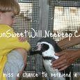 IOSW penguin