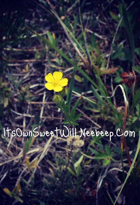 IOSW yellow flower