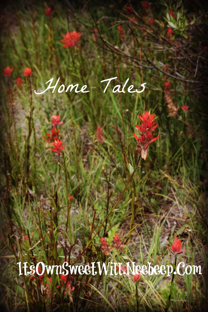 Iosw hometales flowers