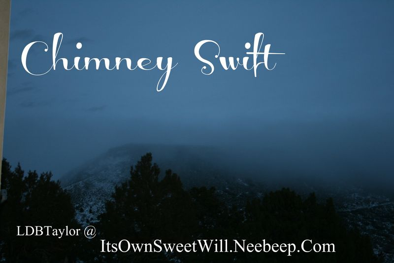 Iosw chimney swift